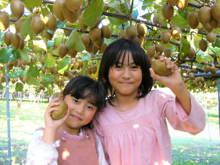 キウイの収穫体験が10月1日(金)から開始で~す♪