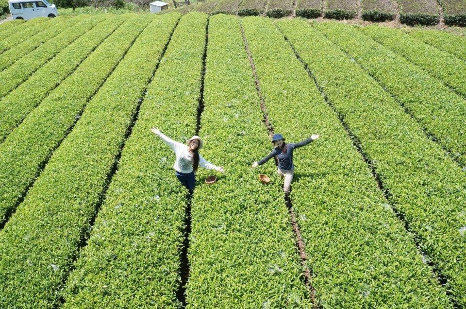 'Tea pickup experience'Image 2